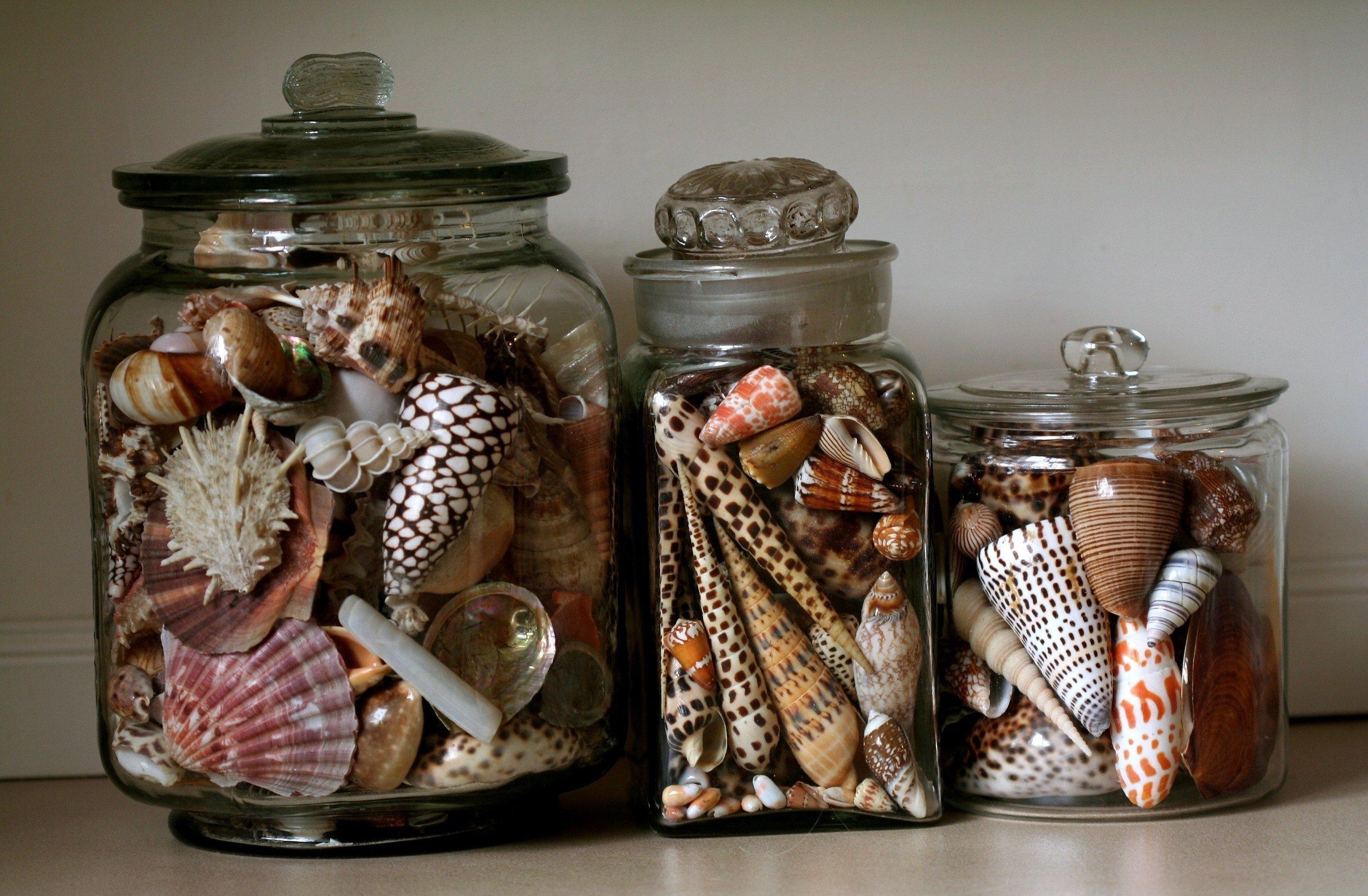 rakushki v interere49 - Идеи для декора в морском стиле
