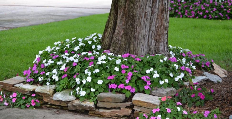 004 973x500 - Ландшафтный дизайн сада и огорода своими руками