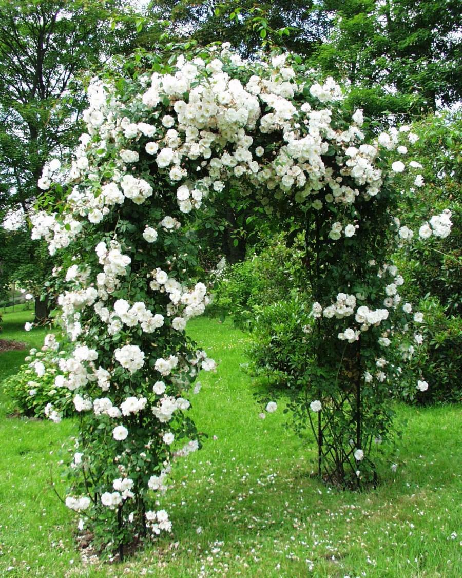 sadovaya arka 86 - Ландшафтный дизайн сада и огорода своими руками